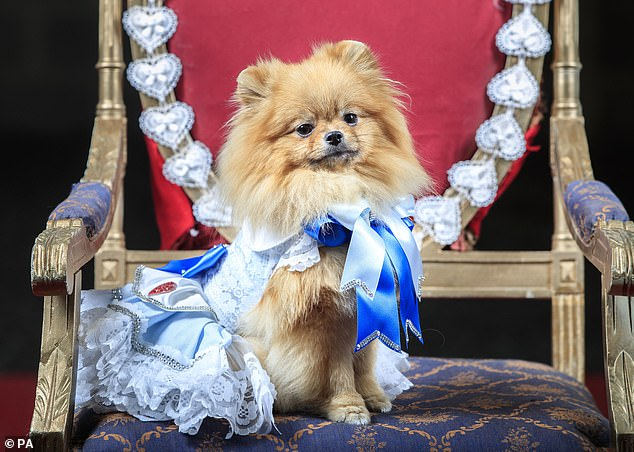 Tallulah was among the puppies who took part in the pageant, which was held to raise money for a dogs rescue charity