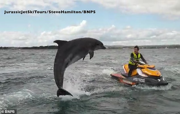 Mr Wakley, who was taking a tour with Jurassic Jetski Tours for his 40th birthday, watches in awe as the dolphin leaps out of the water