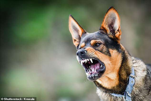 A dog is understood to be at the centre of the mysterious death, the ABC reported (stock image)