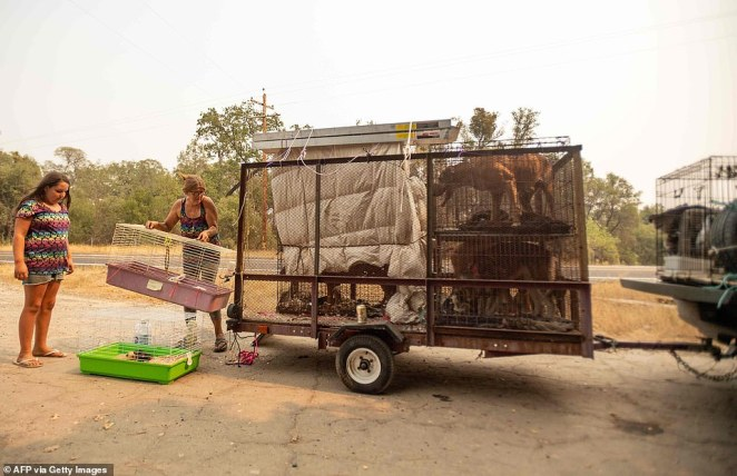 Annette Smart (R) and her granddaughter Malina Sandoval, 10, check on their animals while evacuating during the Creek Fire