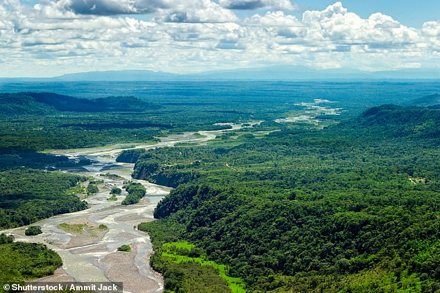 Previous research has shown long-term increases in tree mortality rates lagging behind tree growth increases in the Amazon forest (pictured)