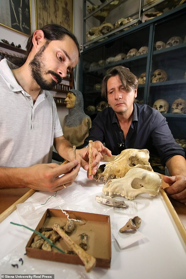 Professor Caramelli (left), of the Florence University, seeing the difference between a dog from Paglicci and a current wolf in the lab of anthropology of the university