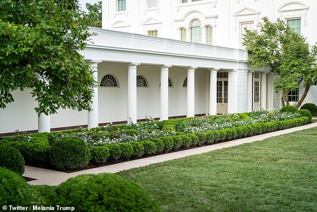 Paid for by private donations, the first lady returned the garden to its roots, honouring the original design by Bunny Mellon, made at the request of President John F. Kennedy in 1962