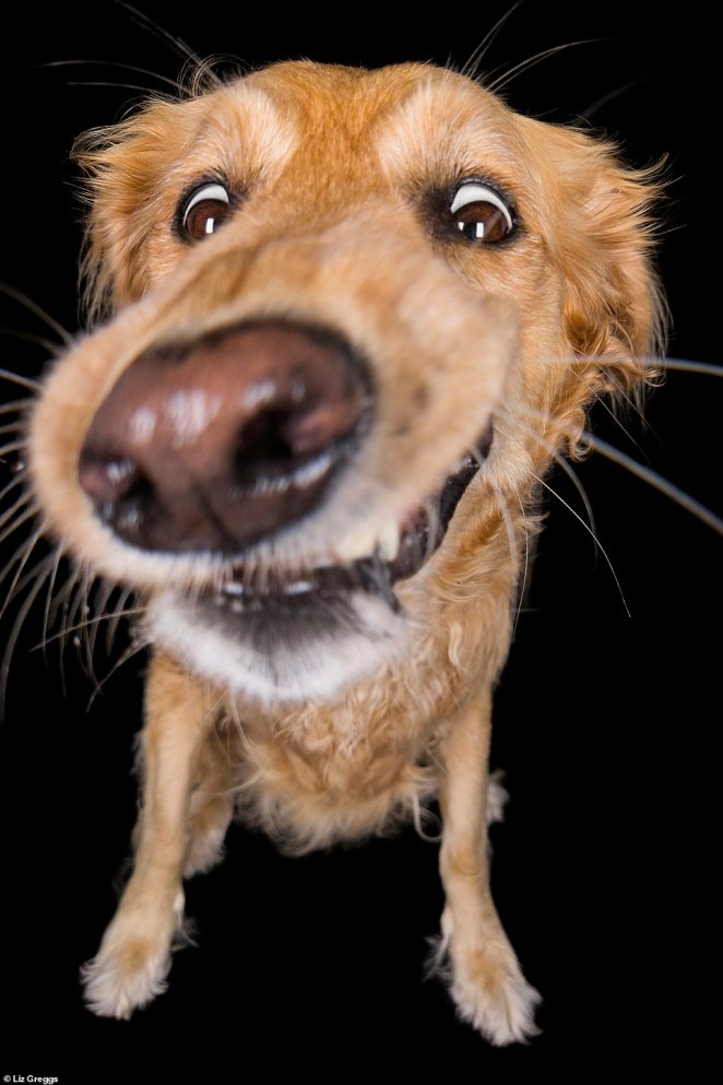 Overjoyed! Using Sony technology, photographer and dog-lover Liz explained how she was able to capture this golden retriever's dazzling eyes in spite of their protruding snout