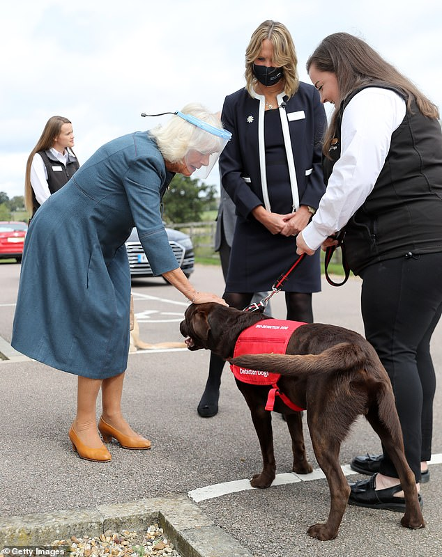Camilla looked happy to meet the dogs, who able to detect subtle changes in temperature of the skin, meaning they could detect if someone has a fever