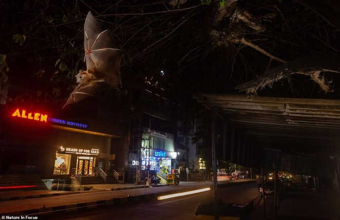 Yashpal Rathore won Photograph of the Year at the Nature inFocus Photography Awards with 'The Dark Knight,' a long-exposure shot of a greater short-nosed fruit bat swooping down onto a busy street in Bangalore. Rathore said he was inspired after spying one of the nocturnal fliers while walking to pick his son up from school one night