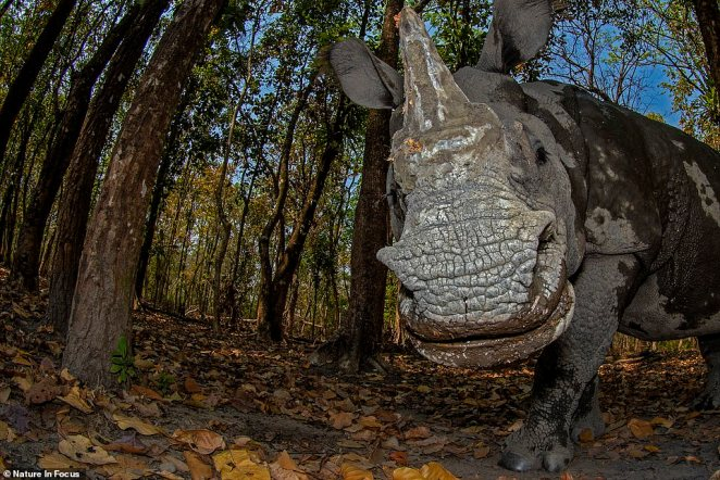 Soumabrata Moulick earned second runner-up in the Creative Nature Photography category with 'Rhino's Day Out,' depicting an Indian rhinoceros venturing outside Manas National Park. Moulick followed the rhinoceros on foot, moving ahead to wait for it near a forest outpost. He was rewarded a close-up encounter with the gentle beast, who appears to be smiling.