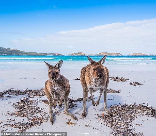 The plastic products will be outlawed in early 2021 to allow coronavirus restrictions to ease and businesses to prepare for the ban (Kangaroos pictured on a beach)