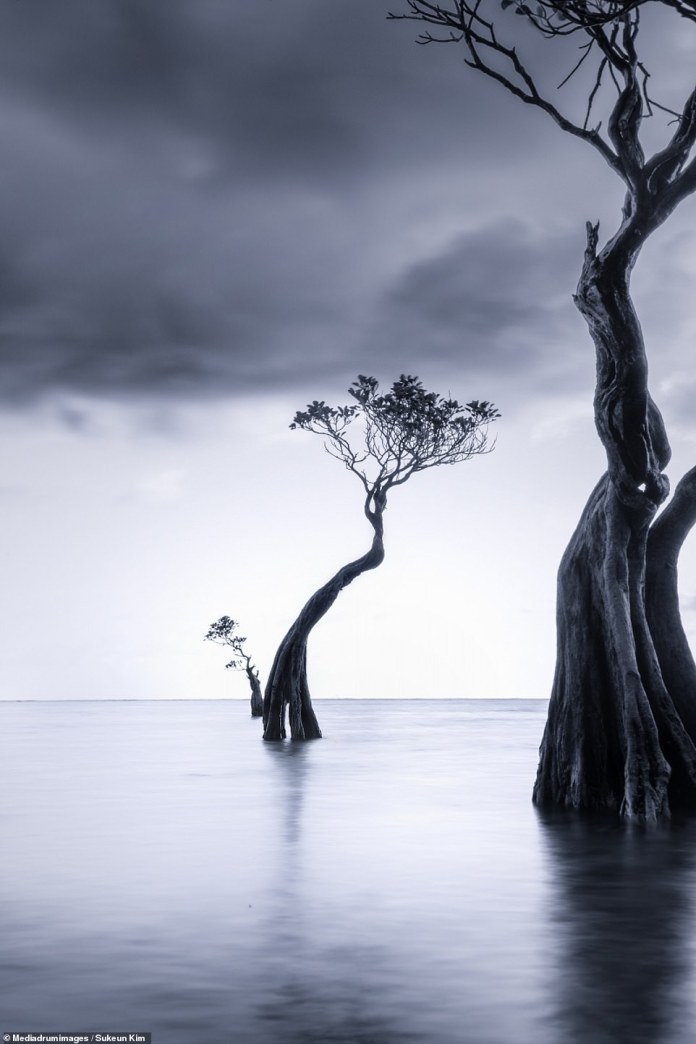 'Story of Tree Family' by Sukeun Kim. The South Korean photographer's series studies the surreal trees of Sumba Island, Indonesia