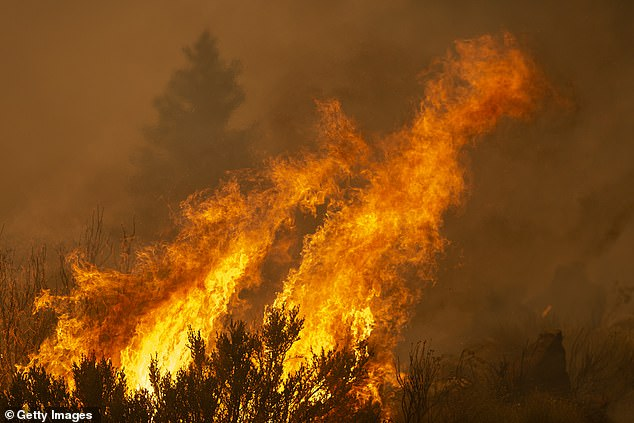 Flames are seen at the Bobcat Fire in the Angeles National Forest on September 10, 2020 north of Monrovia, California