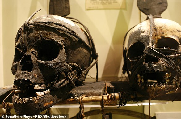 Children's skulls used as trophies in Assam, pictured, on display in the museum