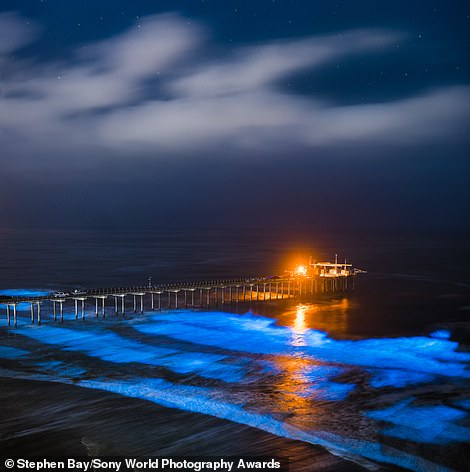 A mesmerising photo taken by American photographer Stephen Bay of a rare bloom of bioluminescent algae illuminating the waves by Scripps Pier in La Jolla, California. It is entered in the landscape category