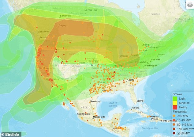 Gail Garber, executive director of Hawks Aloft Inc, shared the same theory, saying migrations maps show a large amount of birds leaving the Pacific Northwest on September 8 and 9 and flying southwest toward Mexico through the Rocky Mountains. Typically, she said, the birds would fly south via California but the fires have likely disrupted their route (map of fires and smoke shown above)
