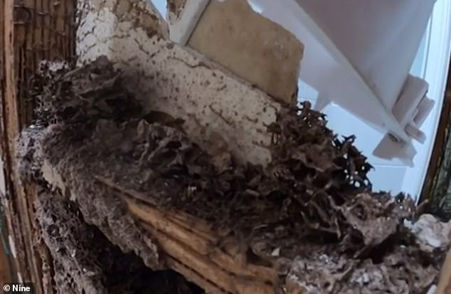 A second building inspector told the family it was one of the worst infestations (pictured) he had ever seen and the house was basically a 'write off'