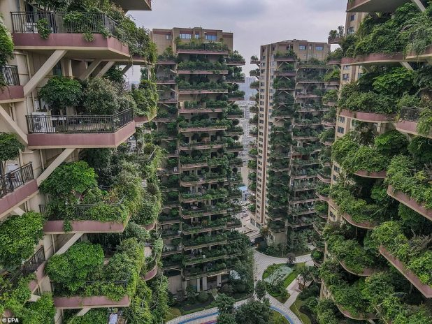 Residents were promised a modern eco-paradise and specially designed balconies for growing plants, but only a handful of families remain in Chengdu's Qi City Forest Garden due to mosquito infection.