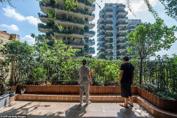 A picture from the beginning of August showing residents in their apartments from a balcony covered with plants
