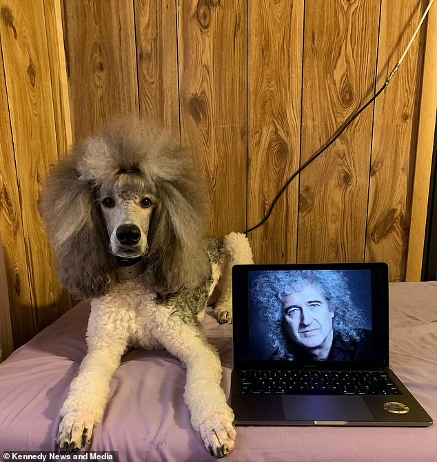 Onyx and his mane, posing next to a picture of his idol, Queen's Brian May.Rose said May would be able to see how cool Onyx was if they ever met
