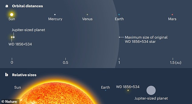 Comparison between the inner Solar System and a white-dwarf system. A Jupiter-sized planet orbits the white dwarf WD 1856+534. (a) The orbit is extremely small - the planet is roughly 20 times closer to the white dwarf than is Mercury to the Sun. The white dwarf was previously a giant star, the outer envelope of which once extended well beyond the planet's orbit. This raises the question of how the planet arrived in its current orbit. All distances are in astronomical units (au), and the size of the giant star is shown to scale; the sizes of the other stars and planets are not shown to scale. (b) The relative sizes of the Sun and Earth, and of WD 1856+534 and its orbiting planet, are shown here for comparison