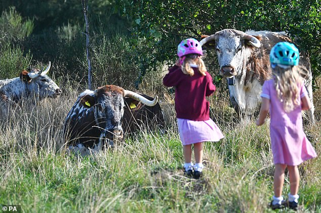 The park is located near Epping Forest where longhorn cattle have been grazing for centuries