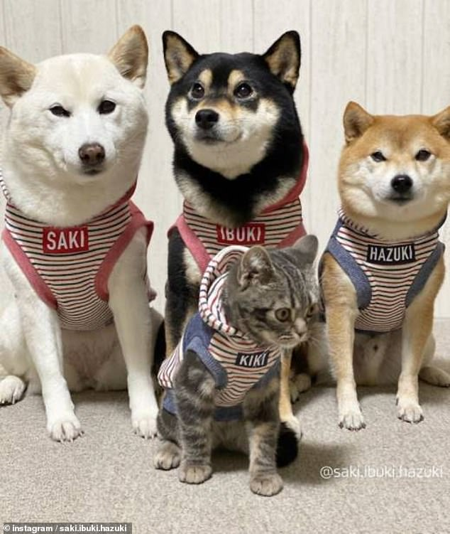 Kiki and the dogs were also seen wearing matching outfits which featured their names emblazoned on the front