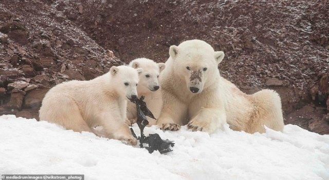 Arctic expedition leader Jens Wikström, 30, from Gothenberg, Sweden, took the shocking scenes at Lifdefjorden, Svalbard, Norway
