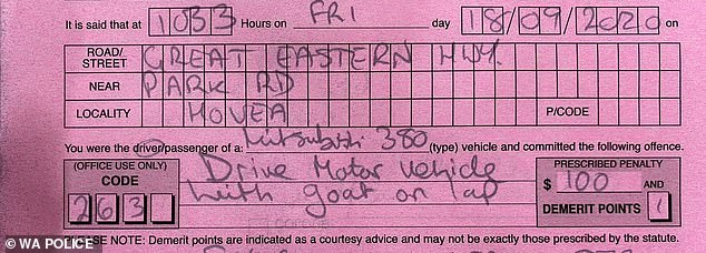 The woman earned a $100 fine and lost one demerit point for driving with the goat on her lap
