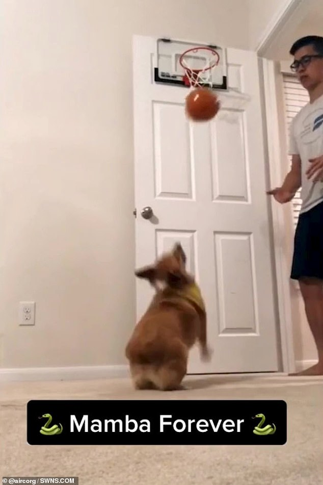 Some of Lilo's tricks are dedicated to the late basketball star Kobe Bryant, whose nickname was 'The Black Mamba'