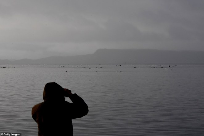 A hooded person on the shore looks out at the hundreds of stranded whales on Thursday.Tasmania's largest previous mass stranding involved 294 long-finned pilot whales at Stanley in 1935