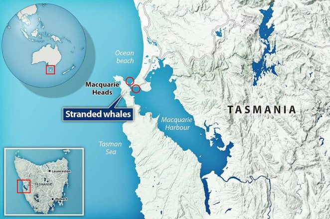 A map shows the two locations where the whales were stranded this week as rescuers desperately try to save the survivors