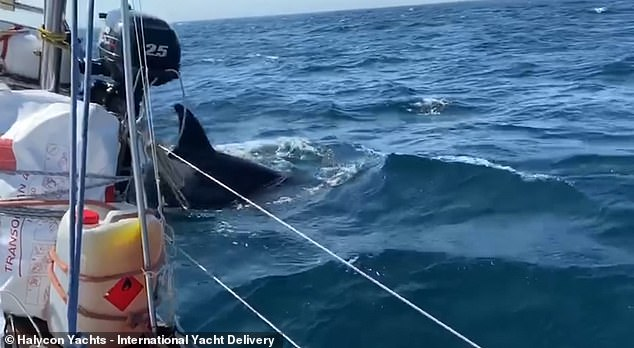 Sailing boats over 50 feet long have been banned from a stretch of Spain's northern coastline where several vessels have been attacked by killer whales