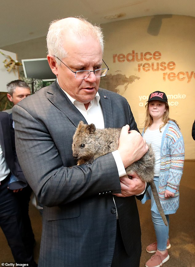 Mr Morrison was not shy at holding a quokka but appeared worried while his daughter and zoo keepers watched on