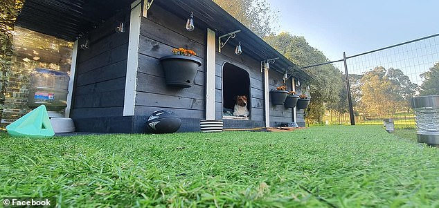 A pet owner has gone above and beyond to build the ultimate dream home for her dogs