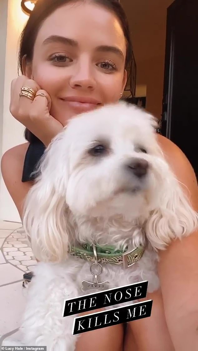 Cute: In the video clip, the Pretty Little liars alum gazed directly into the camera as she rested her head in one hand and smiled sweetly while holding the fluffy white pup in her lap