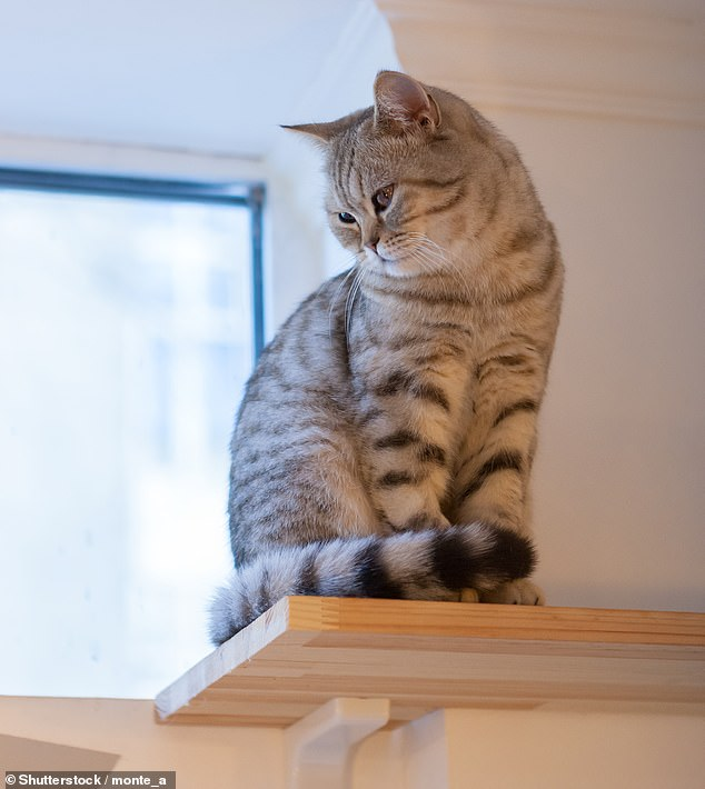Dr Righetti suggested giving cats spaces to climb up high where they feel safe and secure and 'a bit superior to us'