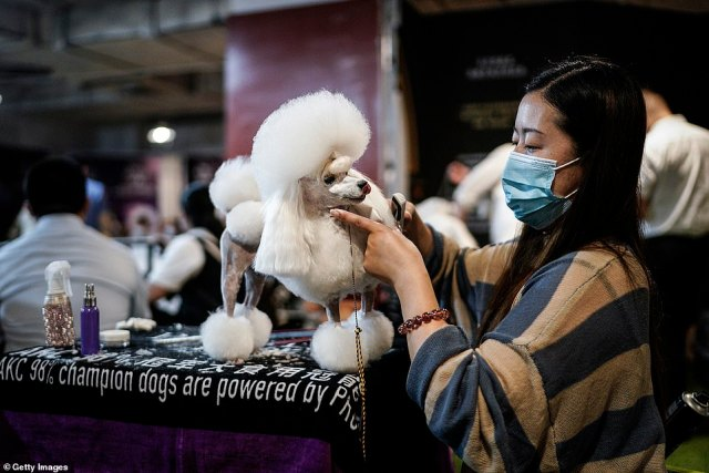 Pet owners in Wuhan have rushed to compete in a high-end dog show with their well-groomed kennels, a sign of life returning to normal in the former coronavirus epicentre despite the pandemic.A woman is seen trimming the hair of a Poodle during the National General Kennel Club branch Competition in Wuhan, Hubei province on September 27