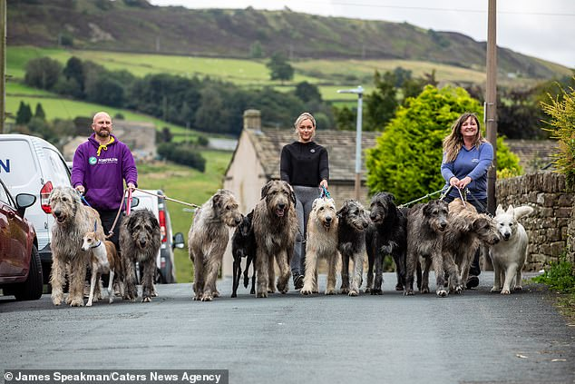 Jason, Eve and Claire walking their dogs. They can only keep a few on a leash at a time, meaning they take them on several walks a day