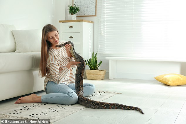 According to the latest annual study by the Pet Food Manufacturers' Association, 0.55 million lizards, snakes, tortoises and turtles were kept as pets in the UK in 2020 — compared with an estimated 9 million dogs and 7.5 million cats. A 2017 study, however, warned that three-quarters of exotic reptiles sold as pets end up dying within a year — with people not knowing how to care for them properly