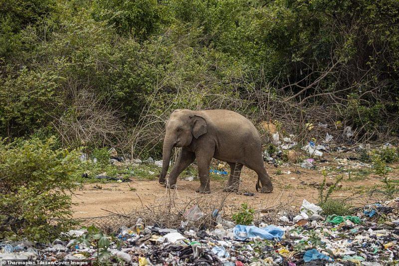 Com a ampliação do lixão, a floresta passou a ser coberta com sacos de polietileno, plásticos descartados e outros resíduos perigosos