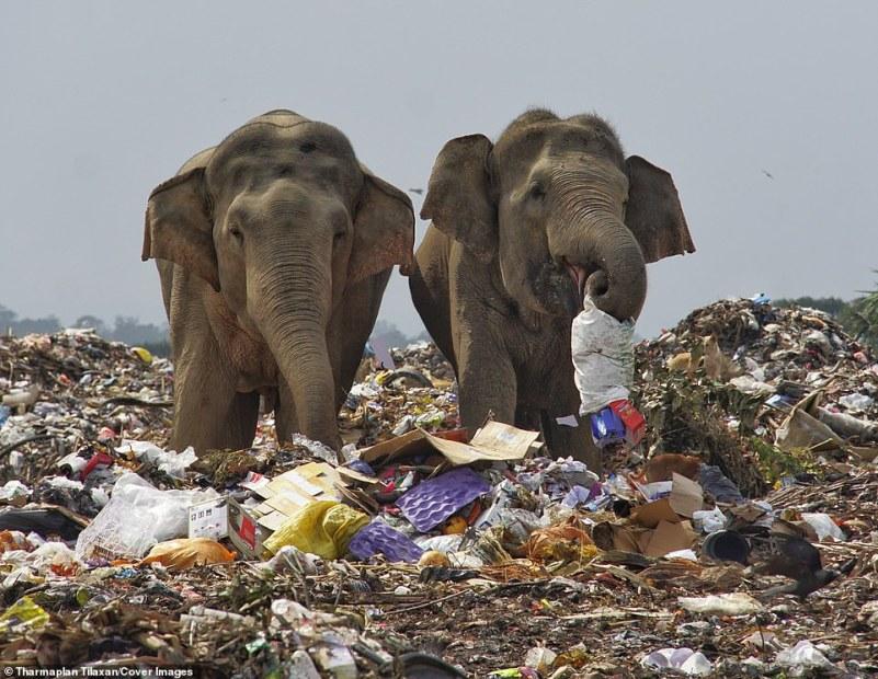 O depósito de lixo a céu aberto está situado nas selvas da Província Oriental e representa riscos para a população local de elefantes, que acidentalmente comem microplásticos no lixo