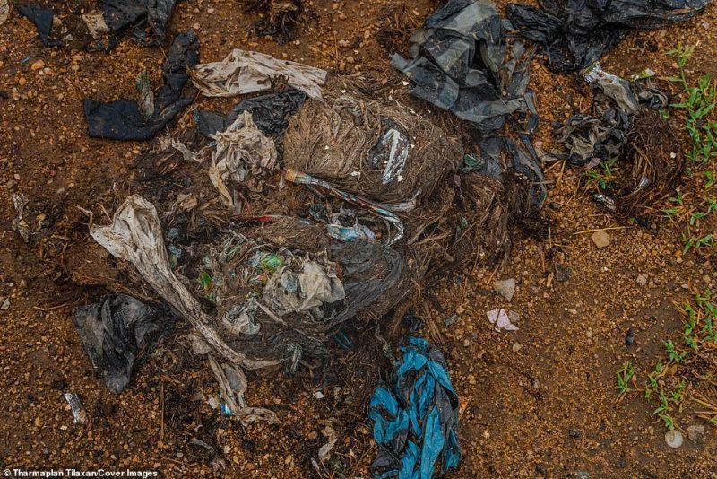 Grandes quantidades de poluentes não digeridos foram encontrados na excreção dos animais selvagens. As autópsias de elefantes mostraram produtos plásticos e polietileno não digestivo em seus estômagos