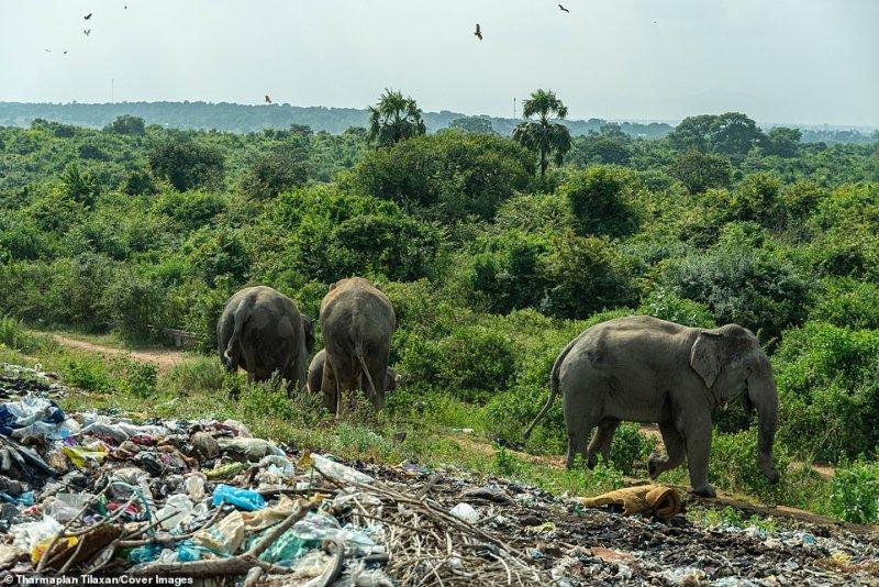 Um depósito de lixo situado perto de Ashraf Nagar perto da floresta (foto) na fronteira com o distrito de Ampara é considerado a causa do novo hábito pouco saudável