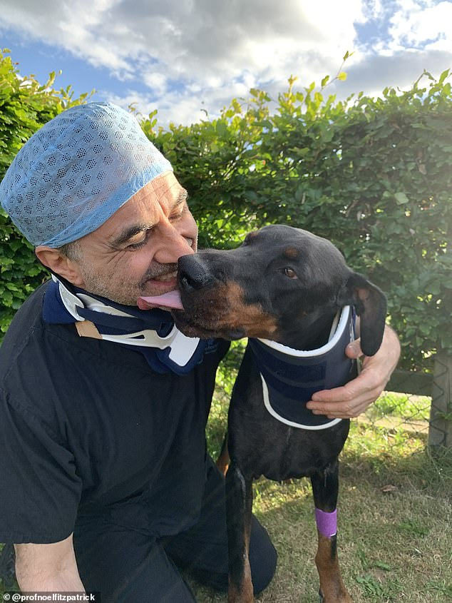Noel and his patient odin the doberman in their neck braces ¿ for both of them, their spinal injuries could have been fatal