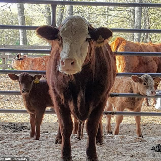 The environmental and health concerns associated with beef are making people reconsider