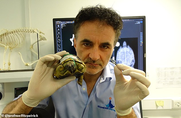 The star of Channel 4¿s series The Supervet fitted three bionic limbs to a Hermann¿s tortoise called Hermes to replace those chewed off by rats during hibernation