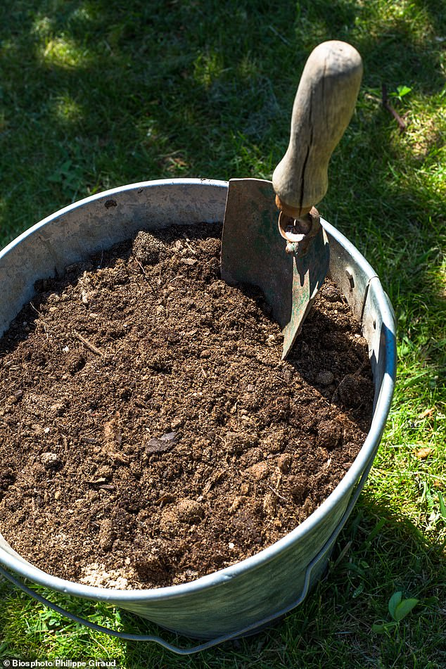 As autumn draws in and the leaves begin to drop from the trees, Nigel suggests gardeners could make use of them by converting them into leafmould for use as a soil improver