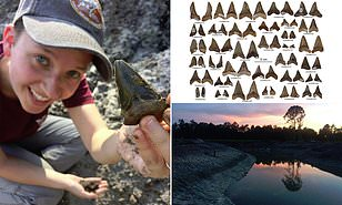 24 Million Year Old Megashark Hunting Grounds Discovered In South Carolina Daily Mail Online