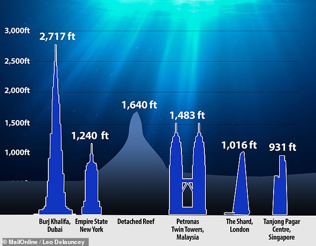 The newly-discovered reef's height dwarfs that of New York's Empire State Building, France's Eiffel Tower and The Shard in London. Reefs form from the growth of successive generations of corals — first attached to rocks on the seafloor and later to the skeletons of their predecessors. They grow up until they reach the ideal depth beneath the sea surface — and over thousands of years can form vast structures as they adapt to changing sea levels