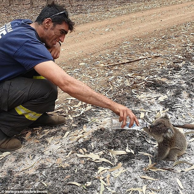 A firefighter giving a koala water during the summer bushfires. This photo was shared by Dr Chris Brown, a popular Australian veterinarian and TV personality in January 2020, who said offering a koala a drink from a bottle isn't without risks, as water forced down their throats can easily end up in their lungs