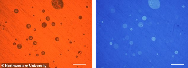 The light microscopy image (left) in reflectance mode shows the drying marks of all the droplets collected on a polyaniline film, but only the acid-modified ones (right) are visible below as they change color of the underlying polyaniline film from blue to green. Scale bar: 200 microns