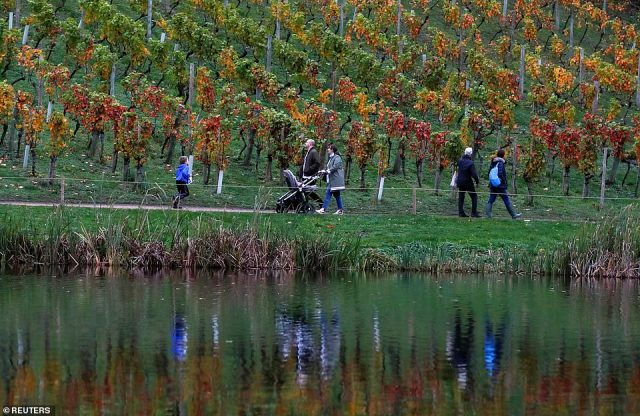 People walk by the vineyard in Painshill landscape garden in Cobham yesterday amid wet weather